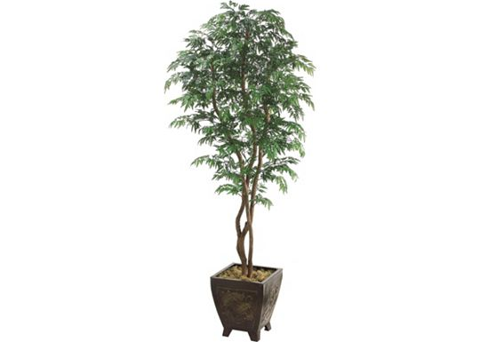 Accessories - Aralia Tree in Wood Container