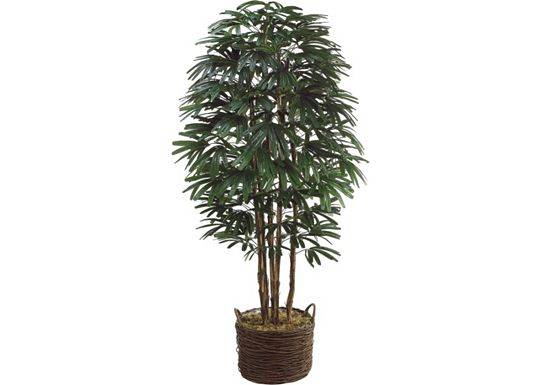 Accessories - Rhapis Tree in Basket