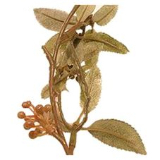 """Rucus Garland w/ 432 Leaves and 16 Berry Clusters, 72"""""""