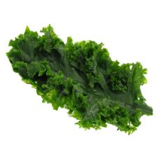 "Replifoods KAL121 Light Green 6-1/2"" Kale Leaf Replica"