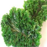 Replifoods Inc. 10pcs Dark Green Kale