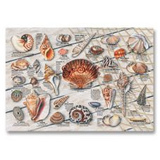 "Seashell Print Placemat, 9-3/4"" x 14"""