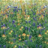 "Bemiss Jason 1325-3 48"" x 25' Wildflowers Corobuff Wrap"