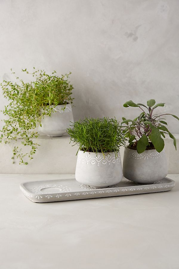 Slide View: 1: Netara Herb Planter Set