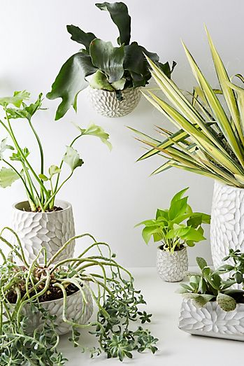Planters   Plant Stands & Pots for Outdoors   Anthropologie