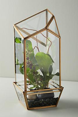 Glass Terrarium Anthropologie