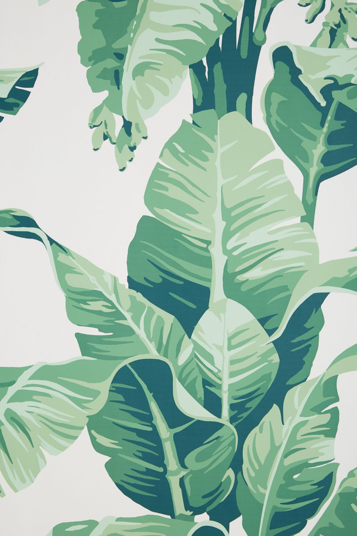 Slide View: 3: Pacifico Palm Wallpaper