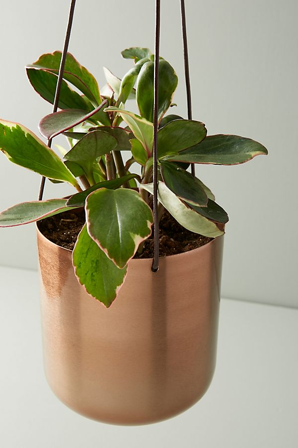 Slide View: 2: Copper Hanging Planter