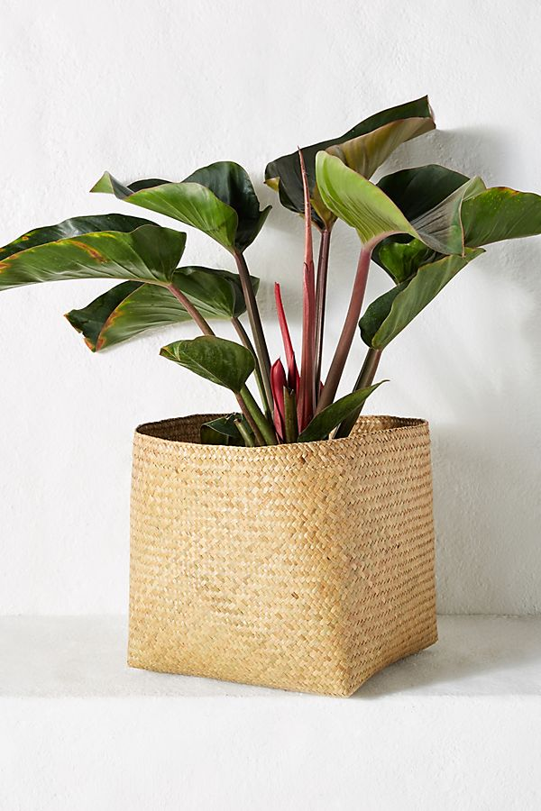 Slide View: 1: Woven Planter Basket
