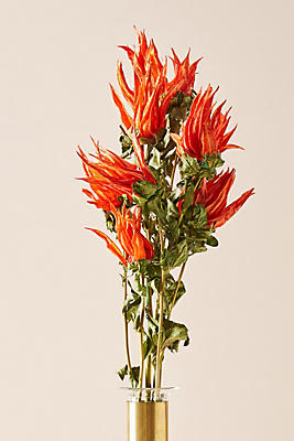 Preserved Indian Paintbrush Bouquet by Knud Nielsen