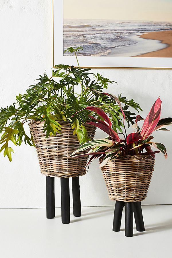 Slide View: 1: Rhubarb Basket Planter