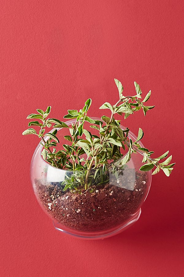 Slide View: 1: Urbz Crystal Clear Window Planter