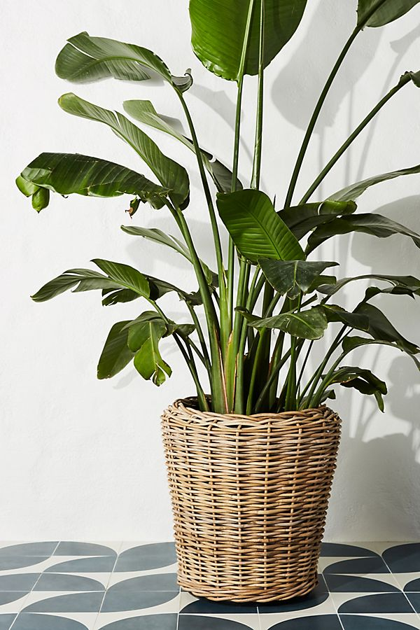 Slide View: 1: Rattan Basket Planter