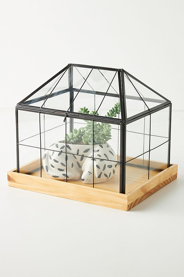 Slide View: 1: Mini Greenhouse Terrarium