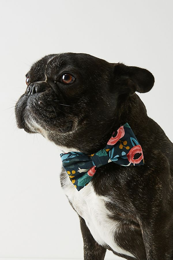 Slide View: 1: Rifle Paper Co. x The Foggy Dog Rosa Bow Tie