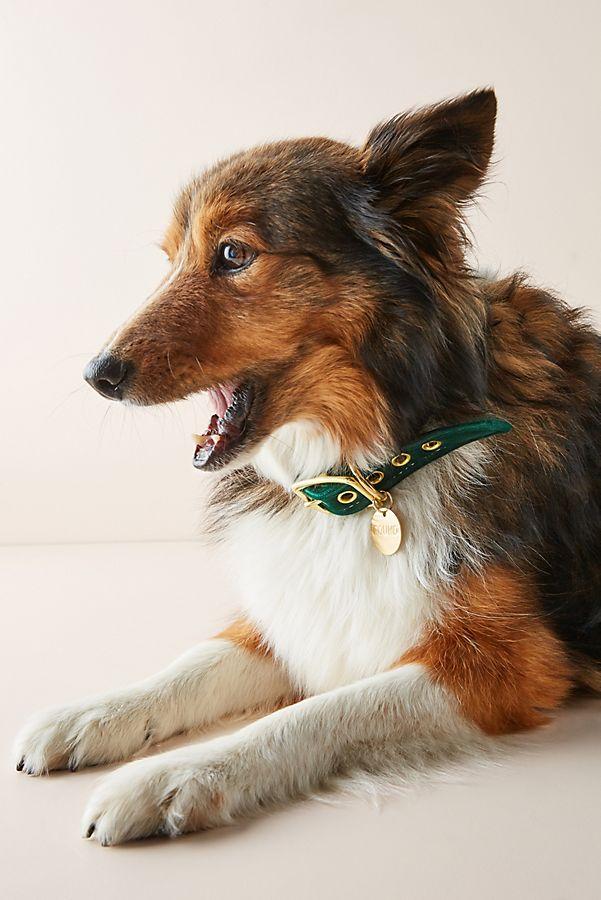 Slide View: 1: Velvet Dog Collar
