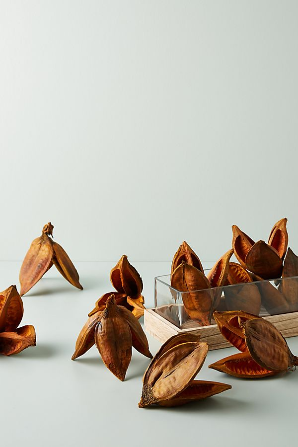 Slide View: 1: Dried Sora Pods, Set of 12