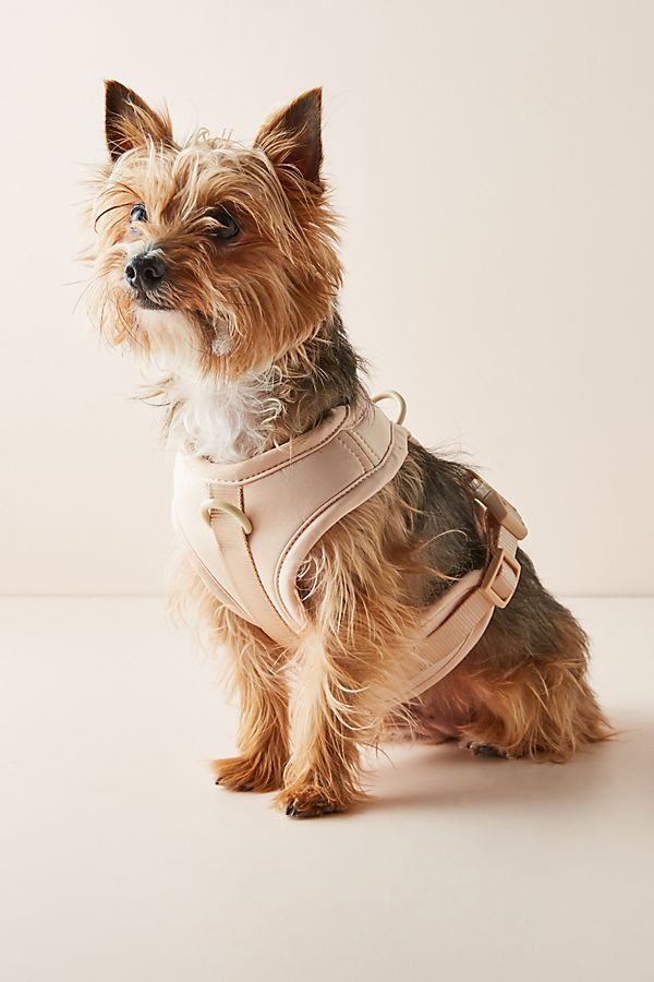 Slide View: 1: Wild One Dog Harness