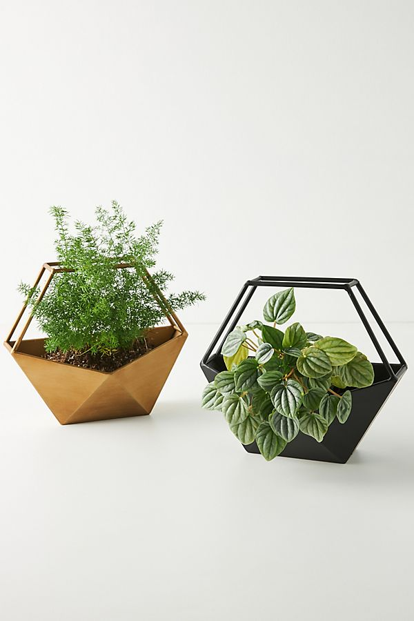 Slide View: 3: Geo Conservatory Planter