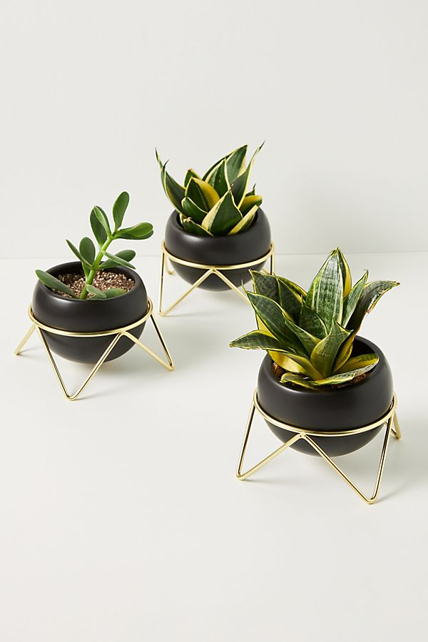 Slide View: 1: Potsy Planters, Set of 3