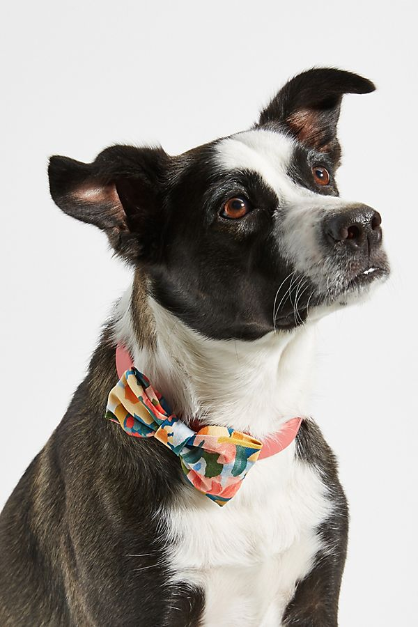 Slide View: 1: The Foggy Dog Bow Tie