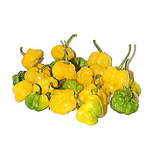 Fresh Scotch Bonnet Chile Peppers, LB