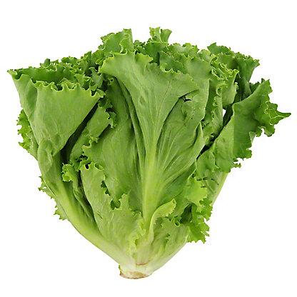 Fresh Green Leaf Lettuce, EACH