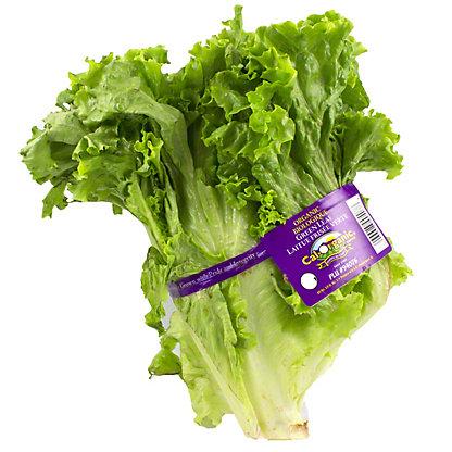 Fresh Organic Green Leaf Lettuce,EACH
