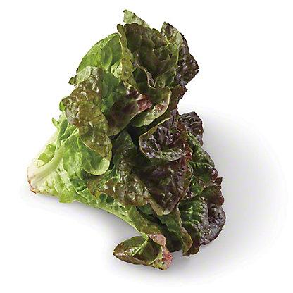 Fresh Organic Red Leaf Lettuce,EACH