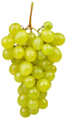 Fresh Organic White Seedless Grapes sold by the pound