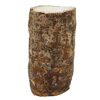 Fresh Malanga Root