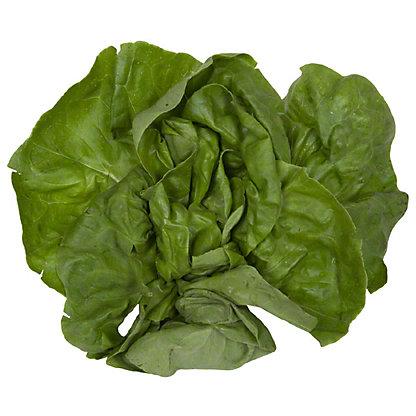 Fresh Boston Lettuce, EACH