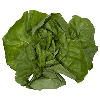 Fresh Boston Lettuce, EACH