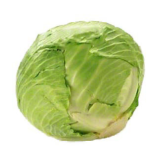 Fresh Organic Green Cabbage