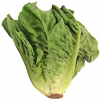Organic Escarole, ea