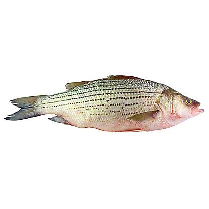 Fresh Whole Striped Bass,LB