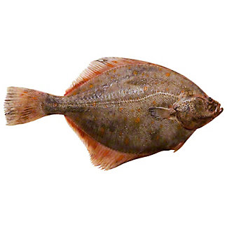 Whole Gulf Flounder