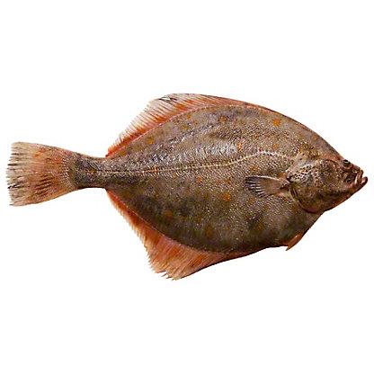 Whole Gulf Flounder