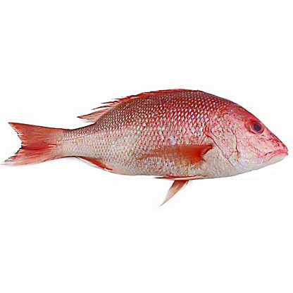 Fresh Whole American Red Snapper, LB