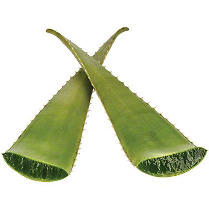Fresh Aloe Vera Leaves,EACH