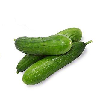 Fresh Persian Cucumber,LB