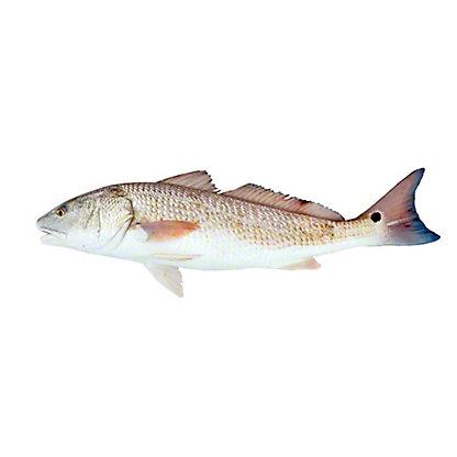 Whole Farm Raised Texas Redfish