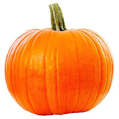 Fresh Pie Pumpkin