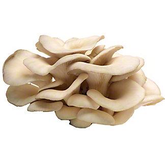 Fresh Oyster Mushroom,LB