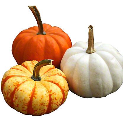 Festive Fall Squash and Gourds