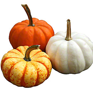 Festive Fall Squash and Gourds, ea