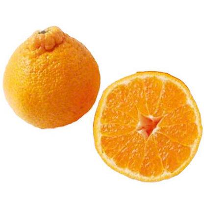 Fresh Gold Nugget Mandarins