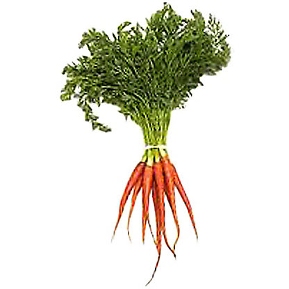 Babe Farms Baby Pink Carrots, ea