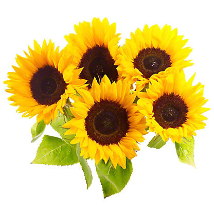 Central Market Sunflowers, 5 Stem Bunch