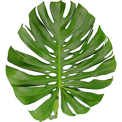 Monstera Leaf, Large